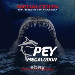 #1141 6.00 Indonesian Megalodon Shark Tooth 100% NATURAL