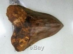 15,1 cm. MEGALODON Shark Tooth 100% Natural Fossil / 5.94 Huge Shark Tooth