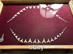 16 GREAT WHITE JAW TOOTH shark teeth megalodon fossil dinosaur bone