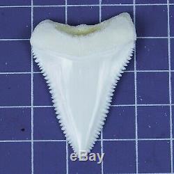 1.779'' Modern Principle Great White Shark Tooth Megalodon Sharks Movie Fan RT07