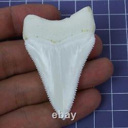 2.413'' Huge Modern Principle Great White Shark Tooth Megalodon Movie Fan HT29