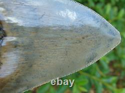 4.33inch MONSTER megalodon shark tooth teeth fossil mako scuba great white mako