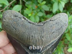 4.74inch megalodon shark tooth teeth fossil mako scuba great white monster mako