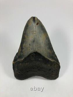 4.93 Rare MEGALODON Fossil Giant Shark Teeth All Natural Ocean Tooth BeachB198