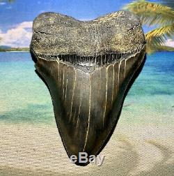 4.9 Megalodon Shark Tooth- High Quality Great Serrations No Restoration