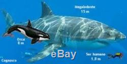 4 Inch Real Megalodon Shark Tooth Big Fossil Giant Genuine Serrated Teeth Meg