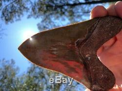5.32 Georgia Green Megalodon Glass Shark Tooth Serration Bourlette NO REPAIR