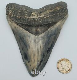 5.86 Massive Blue Indonesian Megalodon Shark Tooth Fossil withSolid Root