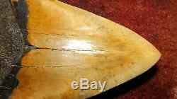 7 Inch Giant Megalodon Shark Tooth