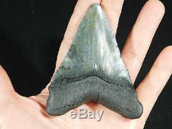 A BIG! Nice and 100% Natural Carcharocles MEGALODON Shark Tooth Fossil 101gr