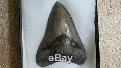 HIGH QUALITY, BIG 6-5/16 Megalodon upper jaw PRINCIPAL ANTERIOR tooth from SC