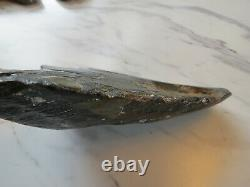 HUGE 6 tooth! Megalodon Shark Tooth Fossil, 6 1/16 inches! No Restorations