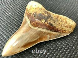High quality 4.64 Indonesian MEGALODON Fossil Shark Teeth, REAL tooth