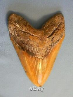 Huge 6 5/16 Inch Megalodon Shark Tooth Fossil