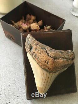 Jan Barboglio Box With Added Real Megalodon Fossilized Tooth