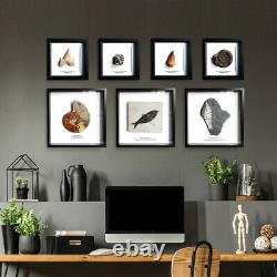 Large Megalodon Tooth mounted on metal stand Real fossil display gift dinosaur