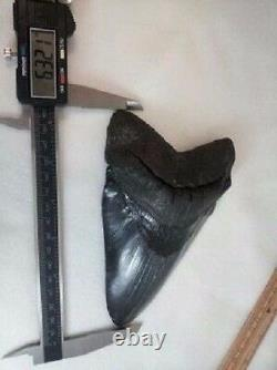 MASSIVE 6.476 Megalodon Fossil Shark Tooth WEIGHS OVER A POUND 19+ oz