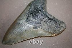 MEGALODON Fossil Giant Shark Teeth All Natural Large 4.70 HUGE BEAUTIFUL TOOTH