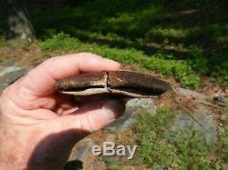 MEGALODON SHARK TOOTH Fossil Teeth 3.5 inch No Restorations