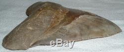 MEGALODON Shark Tooth LARGE 5 7/8 Slant x 5 1/2 H x 4 1/2 W 15+ Oz JAW FOSSIL