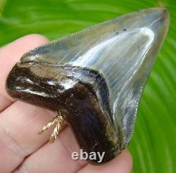 MEGALODON Shark Tooth Necklace 2 & 1/2 in. JUVENILE MEG 14K GOLD BALE