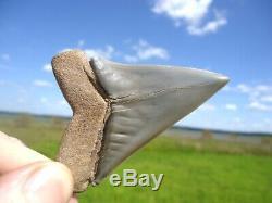 Massive Lesser White Shark Tooth Florida Fossils Sharks Teeth Mako Megalodon Era