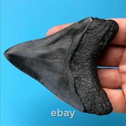 Megalodon Fossil Shark Tooth 3.71 Nice Condition! Authentic Teeth t30