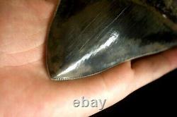 Megalodon Shark Tooth 5,36'' x 4,4'' Huge Widest Upper Indo Deep Blue Colour