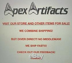 Megalodon Shark Tooth 6.9755 inch 100% NATURAL WORLD CLASS! Best on eBay