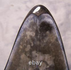 Megalodon Shark Tooth Shark Teeth Fossil Stunning Color 5 1/4 Polished Jaw