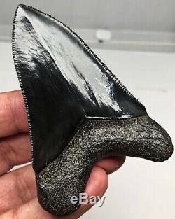 Museum Quality Megalodon Tooth Fossil Shark Teeth JET BLACK Upper Anterior GEM