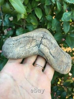 Real Megalodon Shark Tooth Almost 6 River Tooth, Sharply Serrated 5 7/8