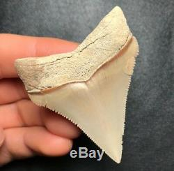 SHARP! 2.24 LEE CREEK AURORA Chub Megalodon Shark Tooth Teeth Fossil Sharks jaw